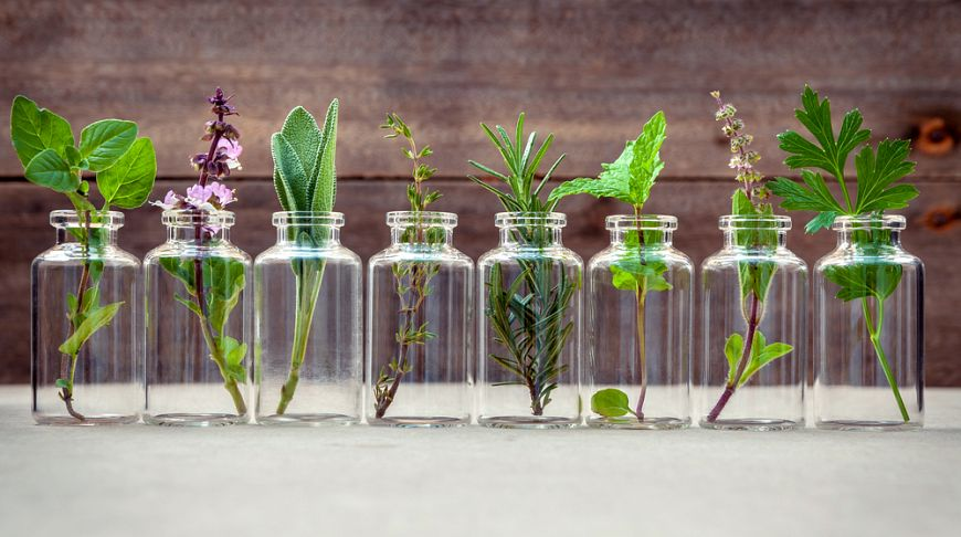 viagra naturale erbe